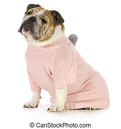 dog wearing sweater