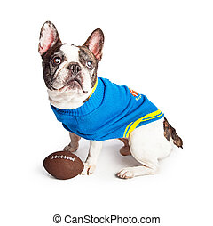 Dog Wearing Sweater With Football