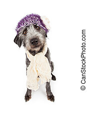 Dog Wearing Winter Hat and Scarf