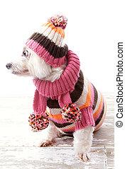 Dog wearing winter sweater beanie scarf