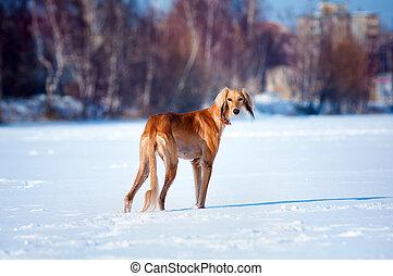dog winter portrait