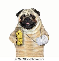 Dog with a bandaged paw 2