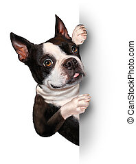 Dog with a blank card vertical sign as a Boston Terrier with a smiling happy expression supporting and communicating a message pertaining to pet care on white.