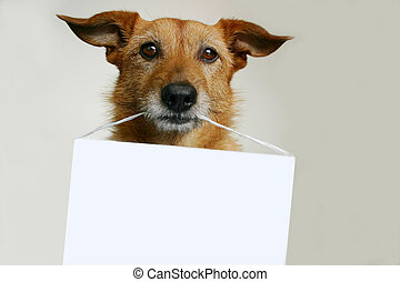 Cute scruffy terrier dog with a blank sign in her mouth