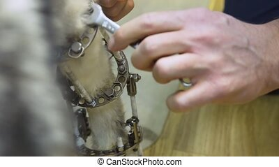 Dog with a broken paw in a veterinary clinic. - Veterinarian...