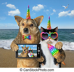 Dog with a cat on the beach together