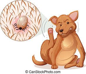 Dog with a flea