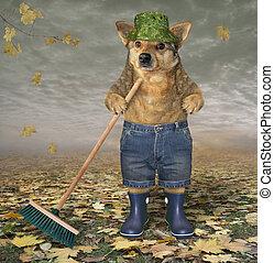 Dog with a garden broom