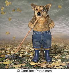 Dog with a garden rake