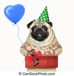 Dog with a gift box and a balloon
