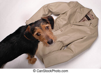 dog with a leather jacket