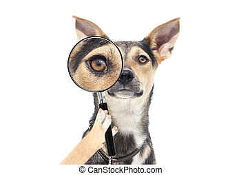 dog with a magnifying glass, looking at the eyes