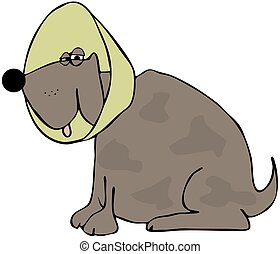 Dog with a neck cone