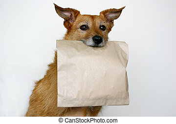 Dog with a plain paper bag - Cute scruffy terrier dog with a...