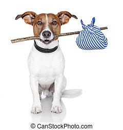 dog with a stick and a blue bag - homeless dog