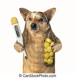 Dog with a thermometer and pills
