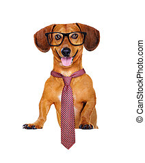 dog with a tie and glasses hodling the blank