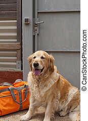 Dog with a travel bag