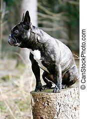 Dog with a wood log