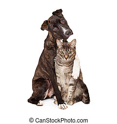 Dog With Arm Around Cat - A pretty brindle coated Mountain...