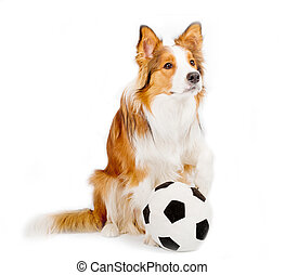 dog with ball isolated