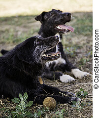 Dog with ball to play