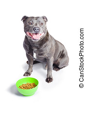 Dog with bowl of food