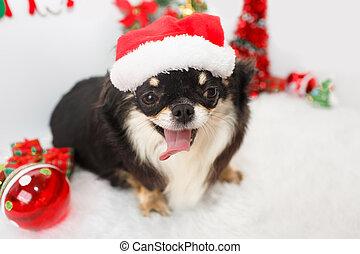 Dog with Christmas