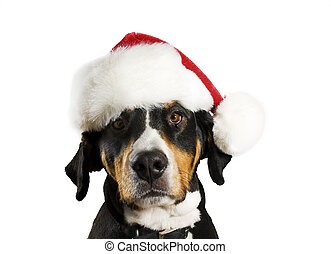 Dog with Christmas hat - Dog with a Christmas hat (cute)