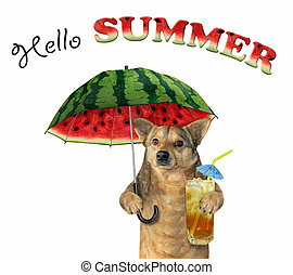 Dog with cocktail and a melon umbrella