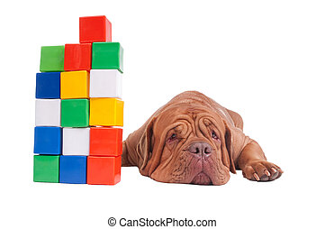 Dog with construction cubes