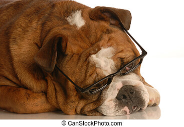 dog with cool glasses on