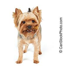 Dog with dental stick