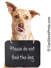 Dog With Do Not Feed Sign