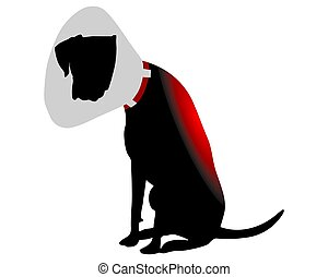 Dog with elizabethan collar and pain in the back