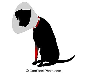 Dog with elizabethan collar and pain in the foreleg