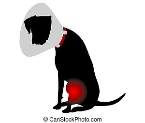 Dog with elizabethan collar and pain in the knee