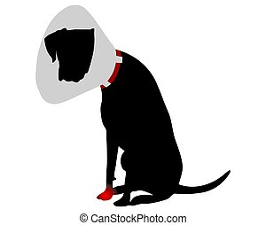 Dog with elizabethan collar and pain in the paw
