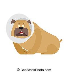 Dog with Elizabethan collar. Pet cone. Veterinary equipment vector illustration
