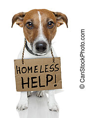 Dog with empty cardboard - homeless dog cardboard