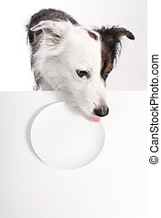 dog with empty plate