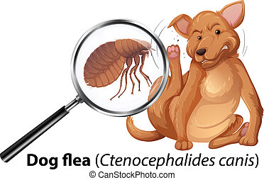 Dog with flea magnified