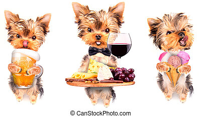 dog with food and drink - wine, bread, cheese and grapes, ...