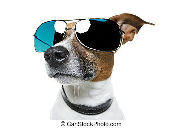 dog with funny shades - dog sunglasses funny