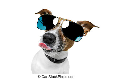 dog with funny shades - dog sunglasses funny