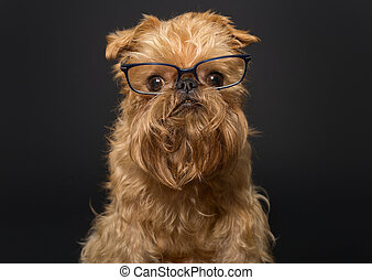 Dog with glasses on a black background - Dog portrait with ...