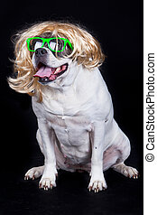 Dog with glasses on black  background. american bulldog wearing glasses
