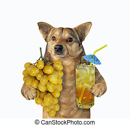 Dog with grape juice 2