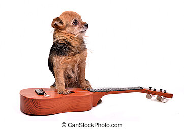 Dog with guitar