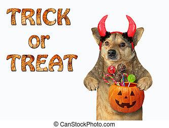 Dog with horns holds a pumpkin 2